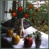 Натюрморт с яблоками и веером